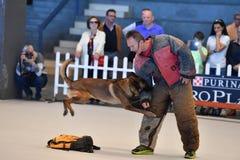 GÉNOVA, ITALIA - 21 de mayo de 2016 - exposición canina internacional pública anual Imagenes de archivo