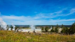 Les pins de doyen et le ciel bleu de dessous géothermique dans yellowstone se garent Photographie stock libre de droits