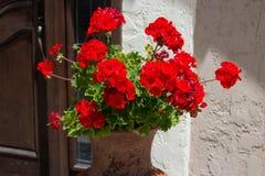 Géranium à la porte Photographie stock