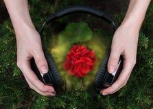 Géranium écoutant la musique Photographie stock libre de droits