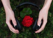 Géranium écoutant la musique Images stock
