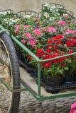 Géranium en fleur dans le vase sur le kart images stock