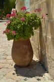 Géranium mis en pot Photo libre de droits