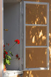 Géranium rouge sur le window-sill Images stock