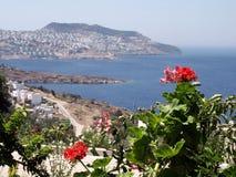 Géraniums, Bodrum - Turquie Photographie stock