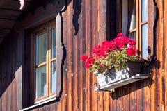 Géraniums rouges colorés dans une boîte de fenêtre photographie stock