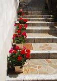 Géraniums sur la rue faite un pas Images stock
