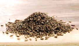 Gérmenes de alcaravea Imagenes de archivo