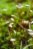 Gérmenes de flor Imagen de archivo libre de regalías