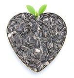 Gérmenes de girasol en forma de corazón Fotografía de archivo libre de regalías