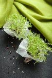 Gérmenes de micro-verde, crecidos en casa para la comida fotografía de archivo