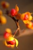 Gérmenes del árbol Fotos de archivo libres de regalías