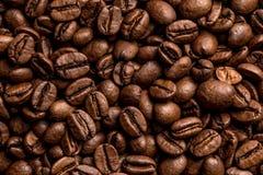 Gérmenes del café Imagenes de archivo