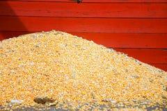 Gérmenes del maíz Fotos de archivo libres de regalías