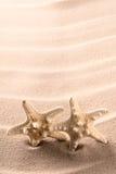 Gêmeos dos peixes da estrela do mar ou da estrela Imagem de Stock