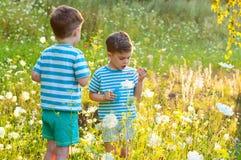 Gêmeos no prado da flor Imagens de Stock