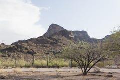 Gór i Saguaro kaktusów rośliny w Arizona dezerterują Obrazy Royalty Free