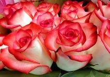 Gór lodowa róże Zdjęcia Royalty Free