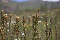 Gór rośliny przy południem Fotografia Stock