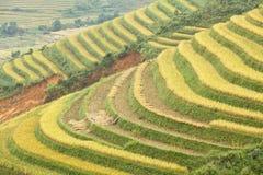gór ryż tarasy obraz stock