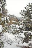 gór Utah zima Fotografia Royalty Free