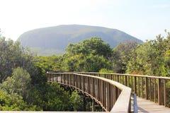 Góra Coolum na światła słonecznego wybrzeżu Zdjęcie Stock