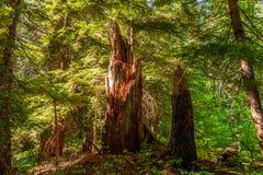 Góra Dżdżysty las zdjęcia stock