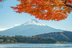 Góra Fuji z klonowym drzewem Fotografia Royalty Free