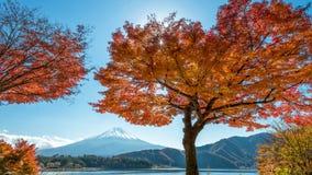 Góra Fuji z klonowym drzewem Zdjęcia Royalty Free