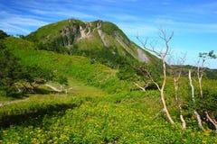 Góra i żółty kwiat Obraz Stock