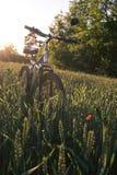 Góra jechać na rowerze na polu na zmierzchu tle Obrazy Stock