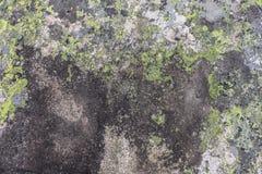 Góra kamień szarość, zieleń i kolor żółty kwitnie fotografia royalty free