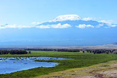 Góra Kilimanjaro Obrazy Royalty Free