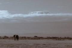 Góra Kilimanjaro od Amboseli Obrazy Royalty Free