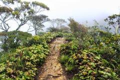 Góra Kinabalu Wycieczkuje ślad Zdjęcie Stock