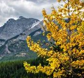 Góra krajobraz, Kanadyjskie Skaliste góry Obraz Stock