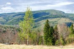 Góra krajobraz w Carpathians, Ukraina Góry, pierwszy plany zdjęcie stock