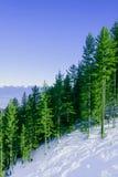 Góra krajobraz w pogodnej zimy mroźnym dniu z Obrazy Royalty Free
