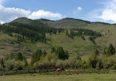 Góra krajobraz w Ulagan okręgu Altai republika zdjęcia royalty free
