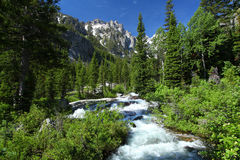 Góra krajobraz w Uroczystym Teton parku narodowym Zdjęcie Stock