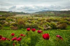 Góra krajobraz z maczkami Obrazy Royalty Free
