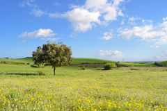 Góra krajobraz ziemia - panorama - Zielona planeta - Obrazy Stock