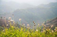 Góra kwiatu i łąki wiosny sezon w kwiecisty natual Obrazy Royalty Free