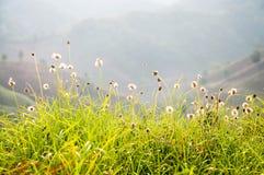 Góra kwiatu i łąki wiosny sezon w kwiecisty natual Zdjęcie Stock