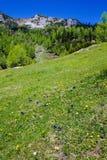Góra kwitnie dalej w wiośnie Zdjęcia Royalty Free