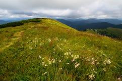 Góra ślad i kwiaty Zdjęcia Stock