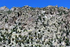Góra Lemmon, Tucson, Arizona, Stany Zjednoczone Fotografia Stock