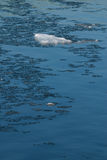 góra lodowa mała Fotografia Royalty Free