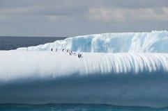 Góra lodowa z pingwinami Zdjęcia Royalty Free