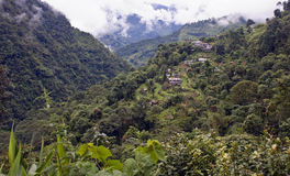 góra nakrywkowy lasowy deszcz Obraz Stock